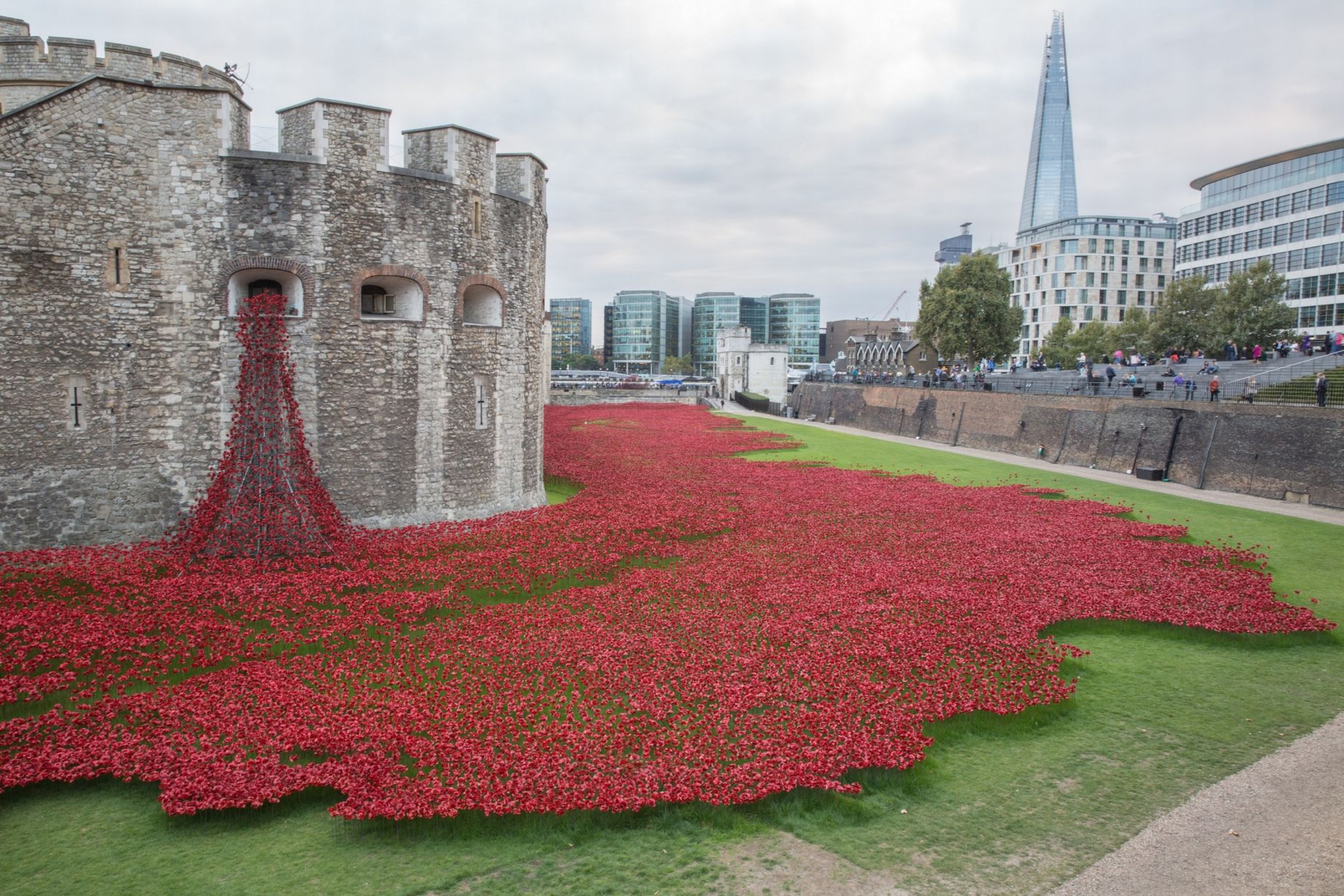 discover the background to the poppy collection for 2015 buckley
